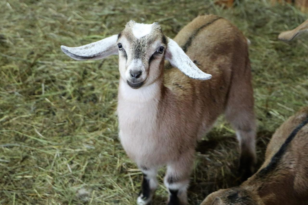 тур «Башкирская коза»