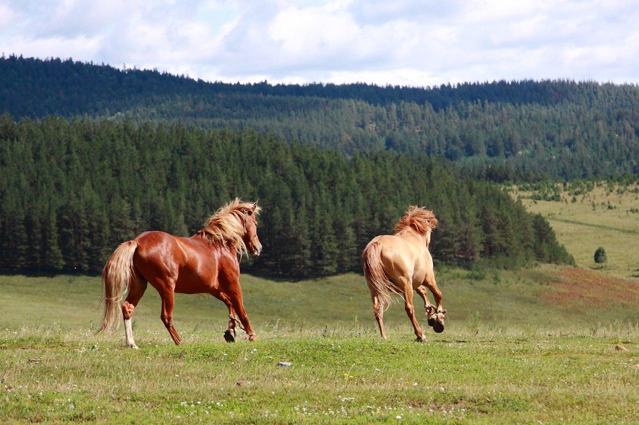 Конный тур Табын